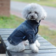 Fashionable Denim jacket for small dogs or cats