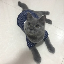 Small Pet's Plaid Shirt
